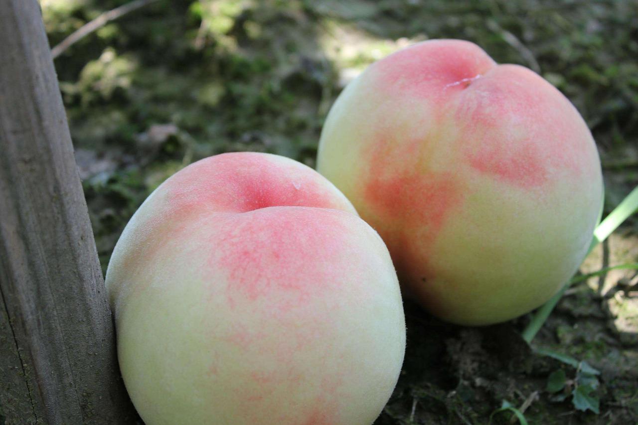 新鮮水蜜桃