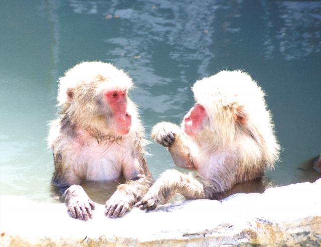 互相查看の猴子